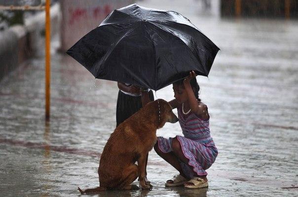 """""""Если у вас большое сердце"""". Дети закрывают от дождя собаку во время муссона в Мумбаи."""