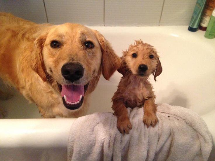 Счастливые и чистые ванна, вода, домашние питомцы, животные, милота, позитив