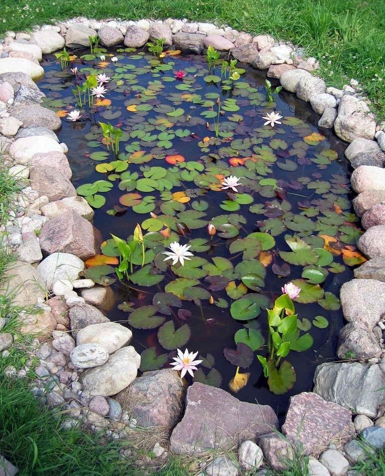 Садовый прудик фото