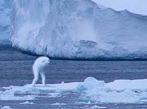 Нингены:гуманоиды из антаркт…