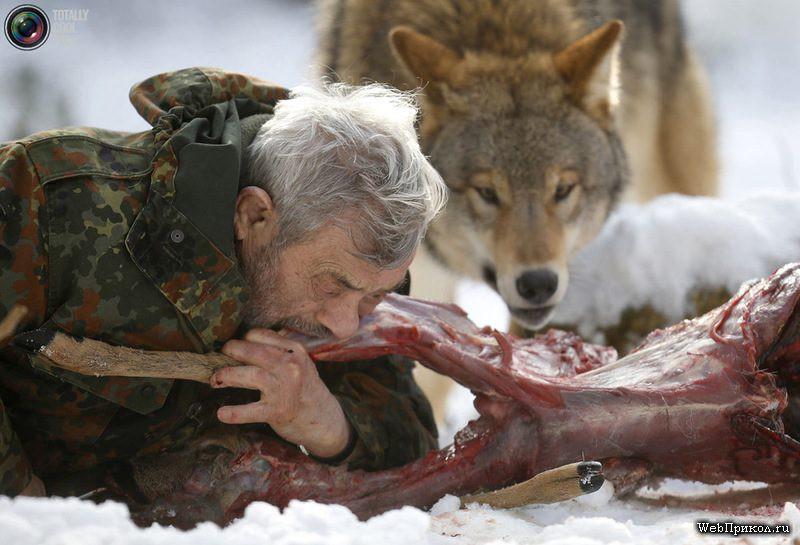 Волк человеку друг!