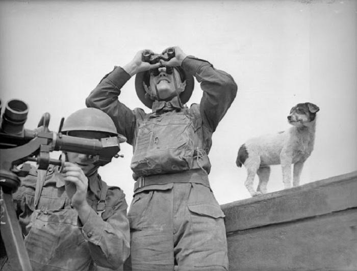 Собака наблюдает за работой артиллеристов.