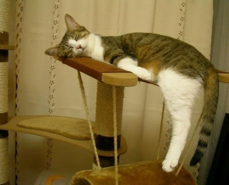 sleepingcats10 Коты, познавшие науку сна