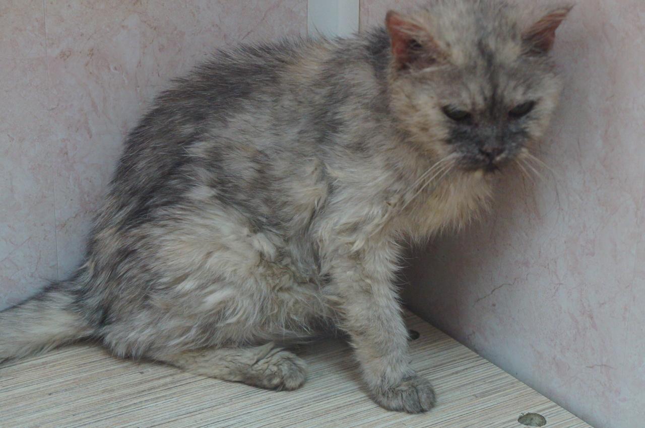 Онкобольную кошку выгнали из дома. Тосе нужна помощь!