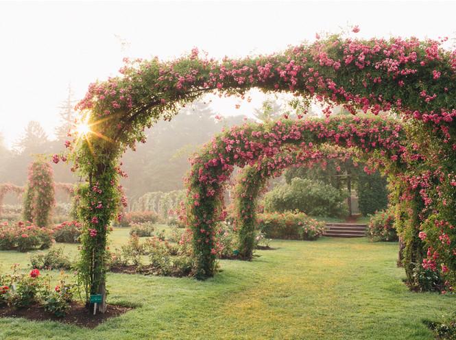 5 лучших растений для вертикального озеленения садового участка