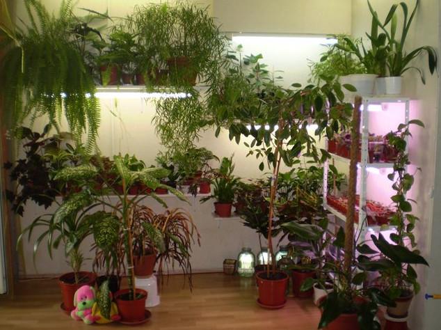 Растения в квартире фото