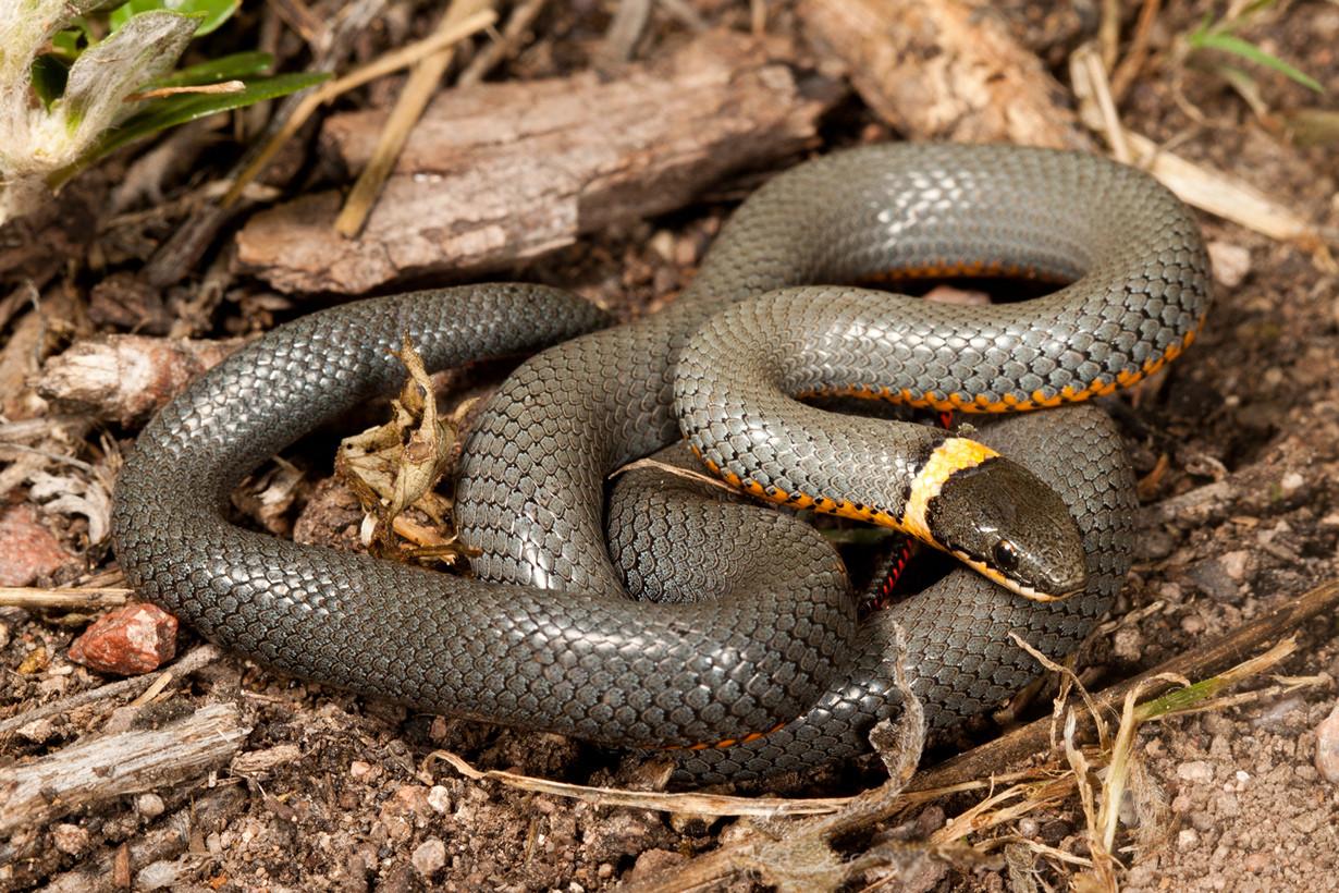10 красивейших змей планеты в мире, змея, красота