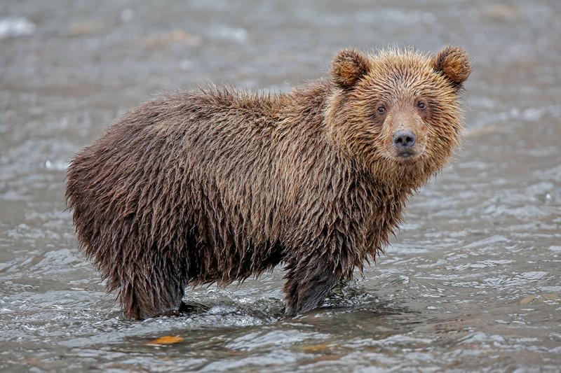 Медвежата Курильского озера