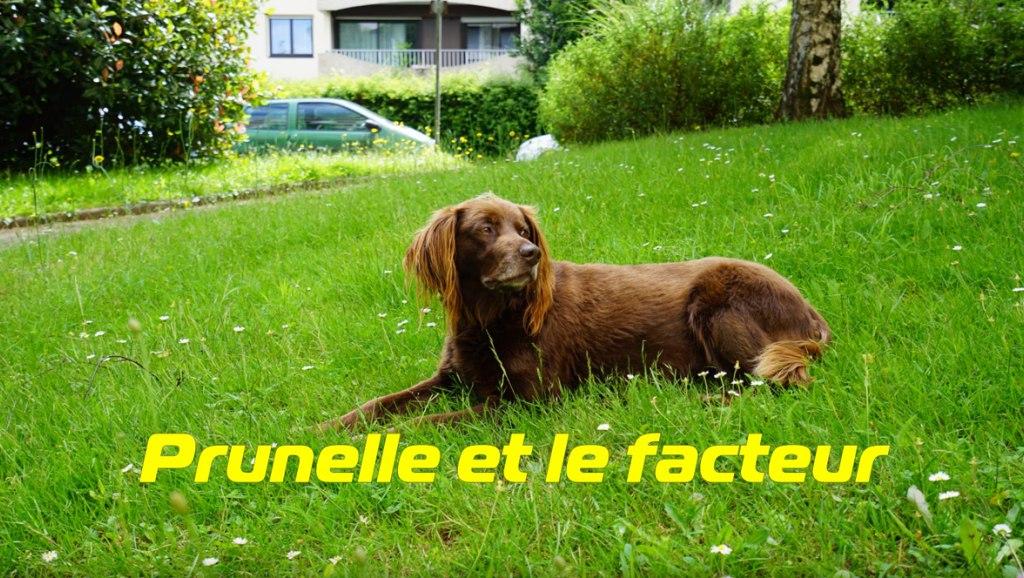 Собака и почтальон: история, растрогавшая Францию.
