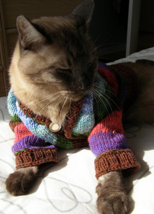 Любитель солнечных ванн  кардиган, кот