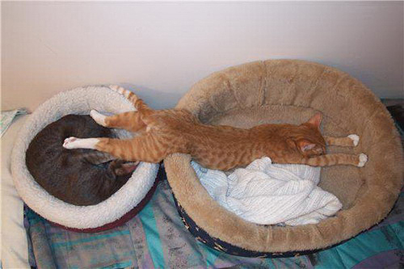 cats 5 25 кошачьих поз для сна