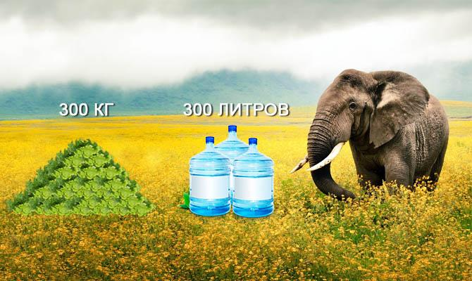 Интересные факты о слонах