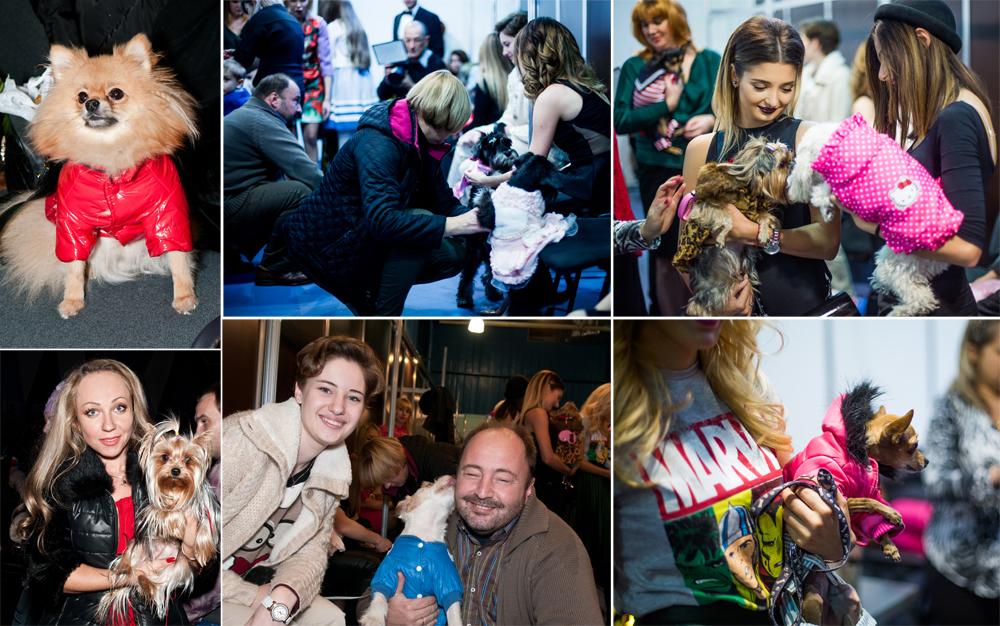 Забавный Backstage шоу маленьких собачек на на «Artpodium 2015»