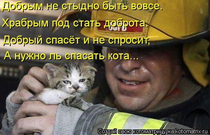 http://mtdata.ru/u24/photoE49D/20156904316-0/original.jpg