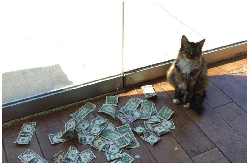 Как обычный кот стал зарабатывать настоящие деньги