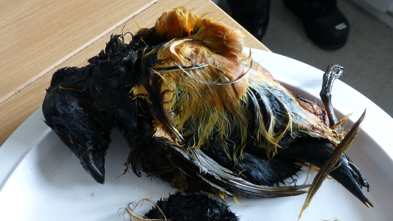 2. Кивиак (деликатес Гренландии) блюдо, мир, экзотика