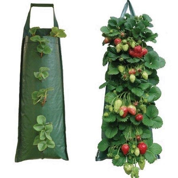 Выращиваем клубнику у себя дома в... мешках