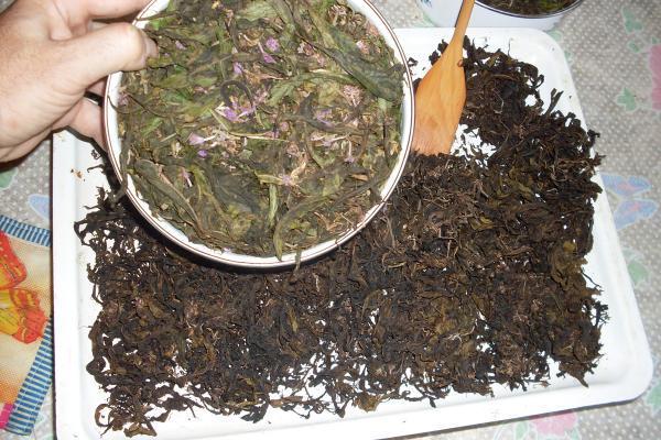 Ферментация трав для чая в домашних условиях 124
