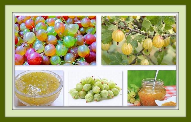 Лечебные свойства плода крыжовника
