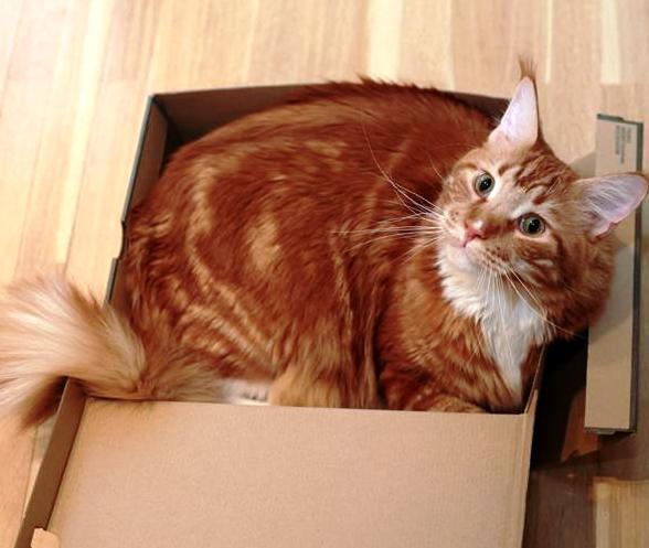 Увидел ветеринар вот ЭТО и перекрестился. Впервые, говорит, вижу брюхоногого кота...
