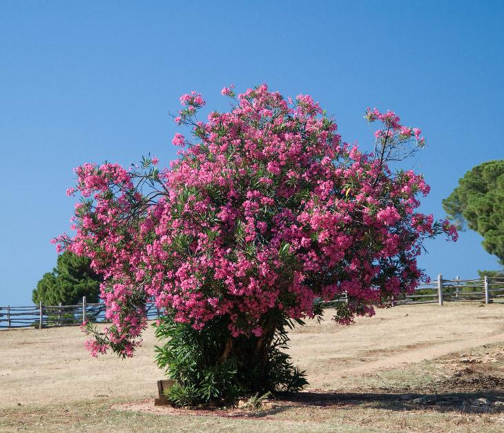 Смертоносная красота растительного мира