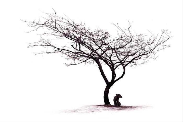 Каждый обречен на одиночество и должен готовиться к худшему