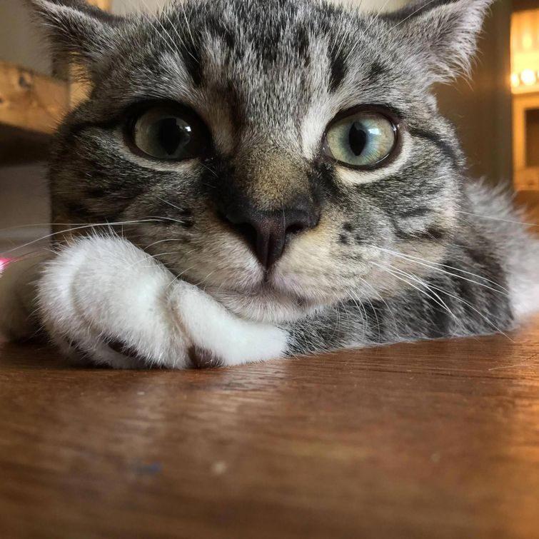 Смешные и восхитительные кошки)