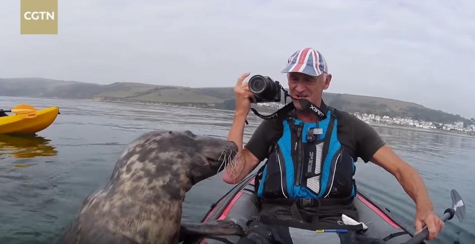 Хороший мальчик: тюлень захотел прокатиться на байдарке с туристом из Англии