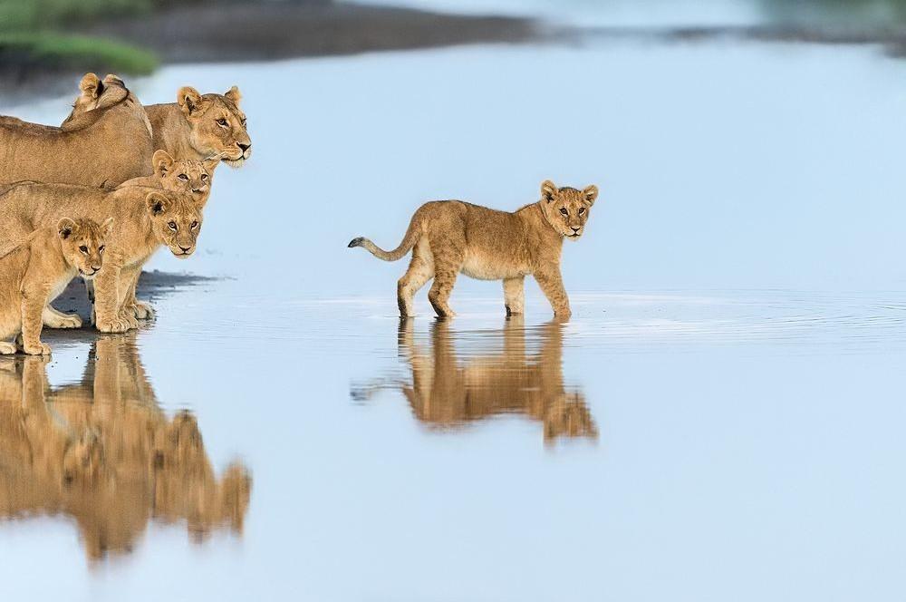 natgeo32 Topo Fotografias National Geographic setembro
