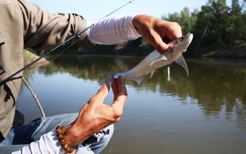 Скрытная рыба линь
