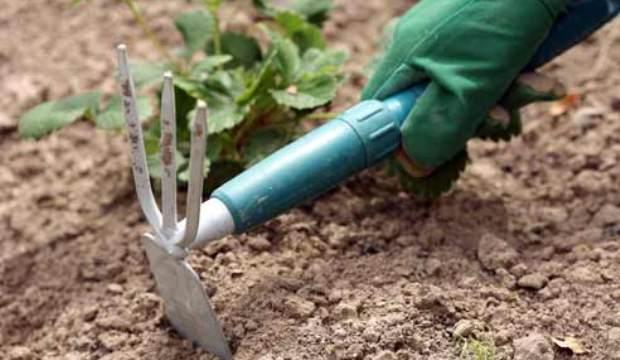 24 февраля 2015 года: промыв почвы и рыхление