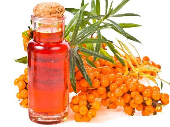 Облепиховое масло. Применение и способы приготовления облепихового масла в домашних условиях