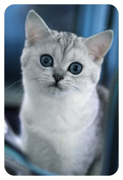 Цитаты о кошках.
