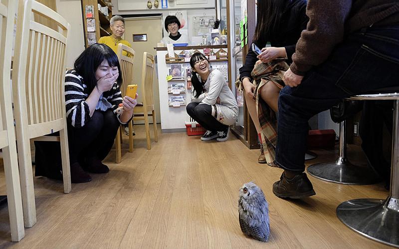 В гостях у сов: необычное кафе в Японии