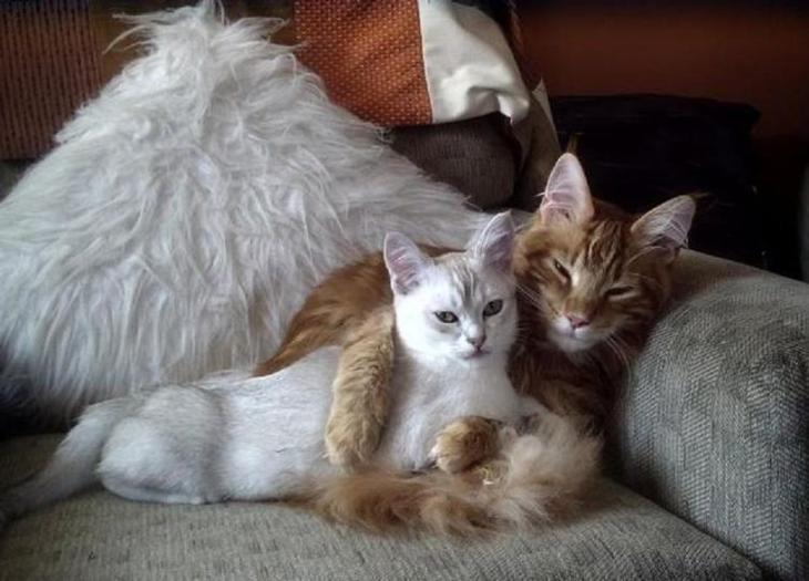 Кошки, доказывающие, что любить может каждый!