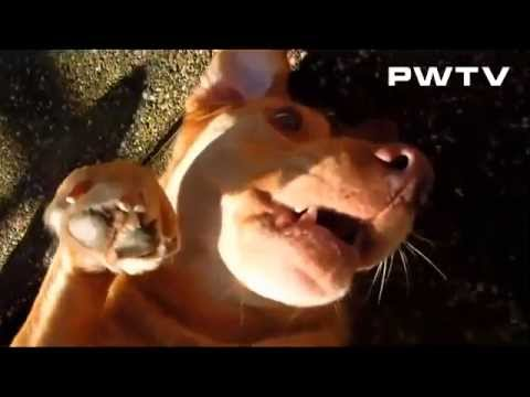 Домашние животные притворяются мёртвыми