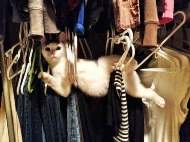 30 фотографий, которыми коты могут гордиться