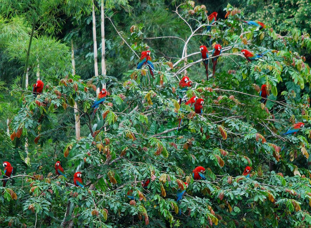 Амазонка – природное чудо планеты