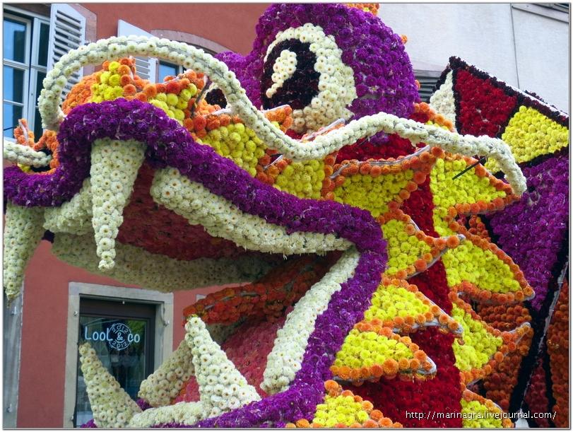 Цветочный парад в Селесте: полмиллиона георгинов