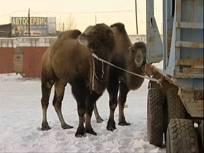 В Красноярске сотрудники МЧС…