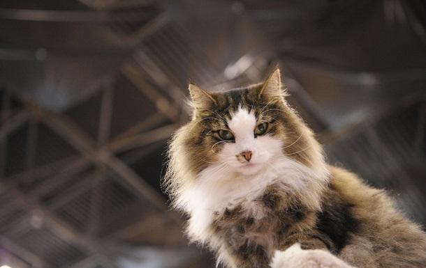 Россиянин случайно застрелил родственника при попытке убить кошку