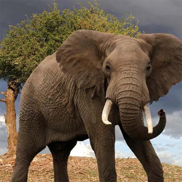Слоны. Их нельзя не любить!!!