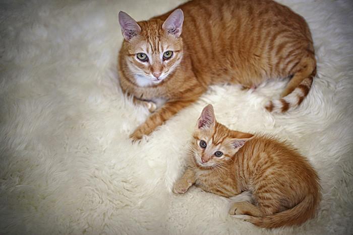 29. котенок, кошка