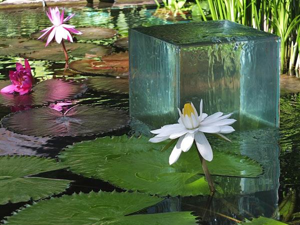 Декоративный водоем с водяны…