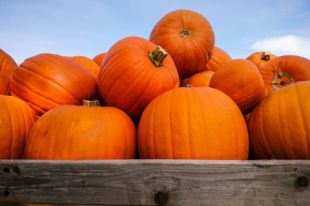 Оранжевый лекарь. Три рецепта вкусных и полезных блюд из тыквы