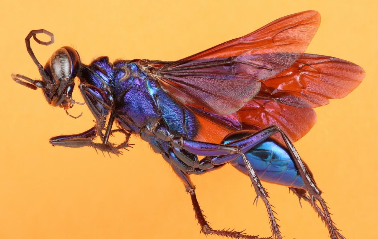 Уникальные снимки насекомых …