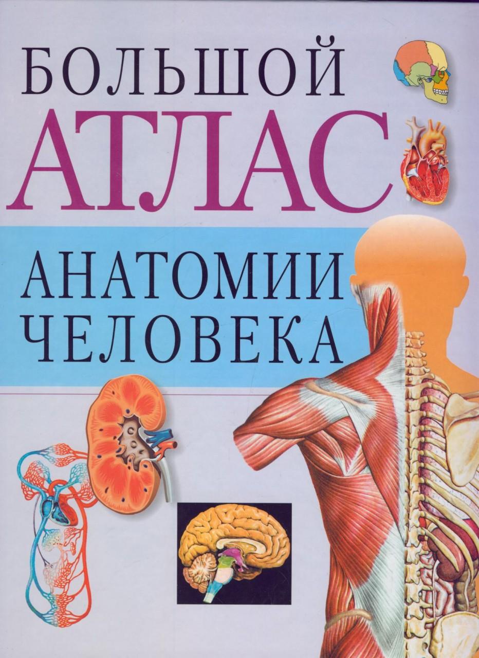 Атлас анатомии человека 10