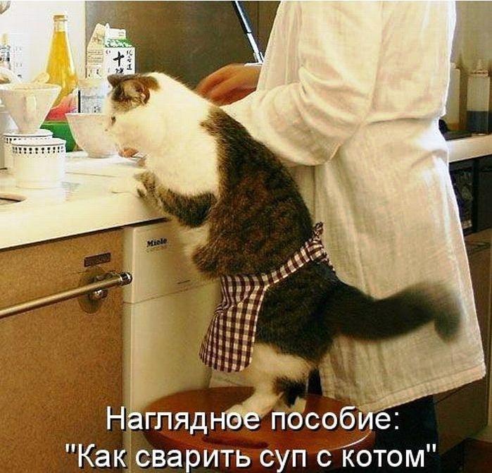 Веселые картинки с котейками и надписями (фотомемы)