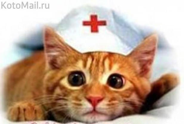 Как и почему нас лечат кошки