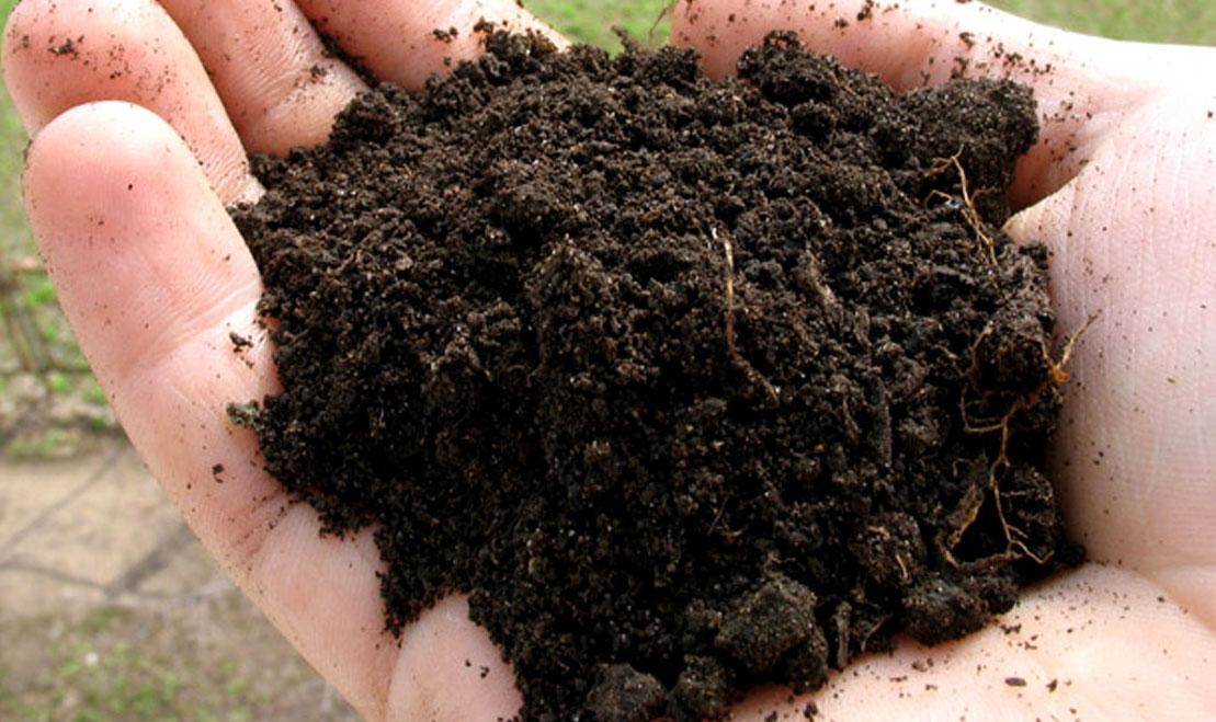 Очищаем почву для рассады